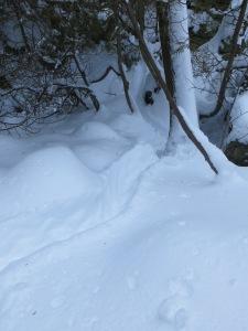 Porcupine Trough Trail (Bruce Trail, Orangeville, December 2014)
