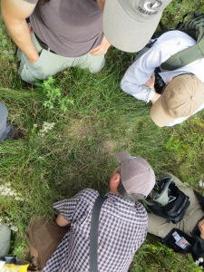 Looking for vole tracks on an ant nest (Hockley Valley Nature Reserve, September 2014)